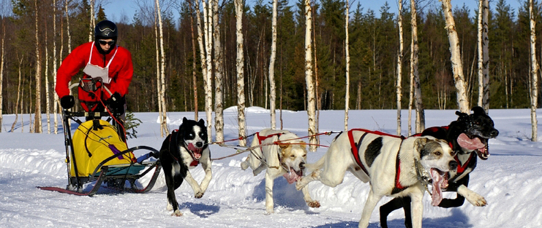 Dog Sled Adventures Montana