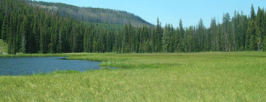 Mud Lake and Meadow off Skalkaho Highway Montana
