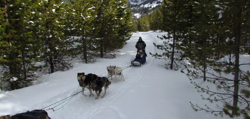 Spirit of the North Sled Dog Tours in Big Sky mt