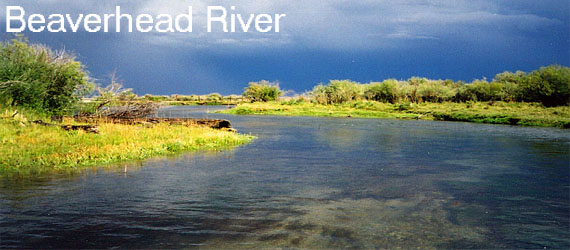 Fly Fish the Beaverhead River in Montana