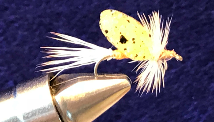 Chucks Golden May Fly #12 Hand Tied by Chuck the Fly Guy