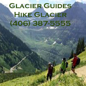 Guided hikes in Glacier National Park