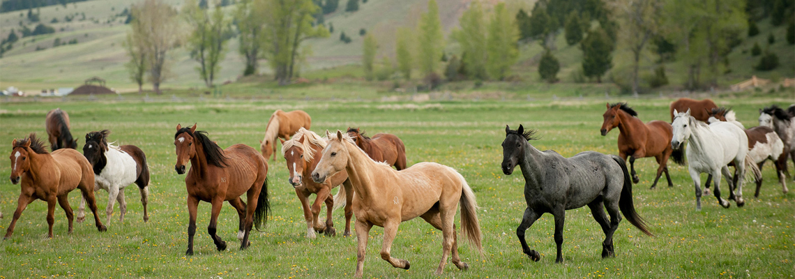 Horses at The Ranch at Rock Creek in Philipsburg Montana